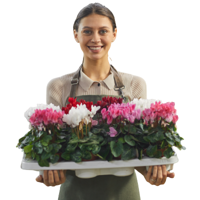 Woman holding tray of flowers